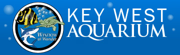 Historic Tours Of America Enewsletter Key West Aquarium Stingray Bay Opens