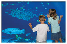 children viewing aquarium