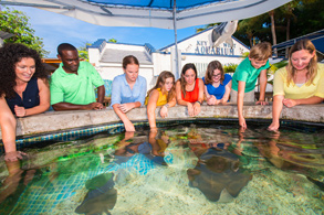 a group of guests petting stingrays at Key West Aquarium touch tank