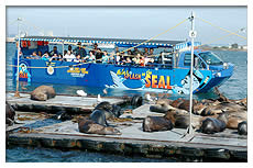 tourists on seal tours vehicle viewing sea lions