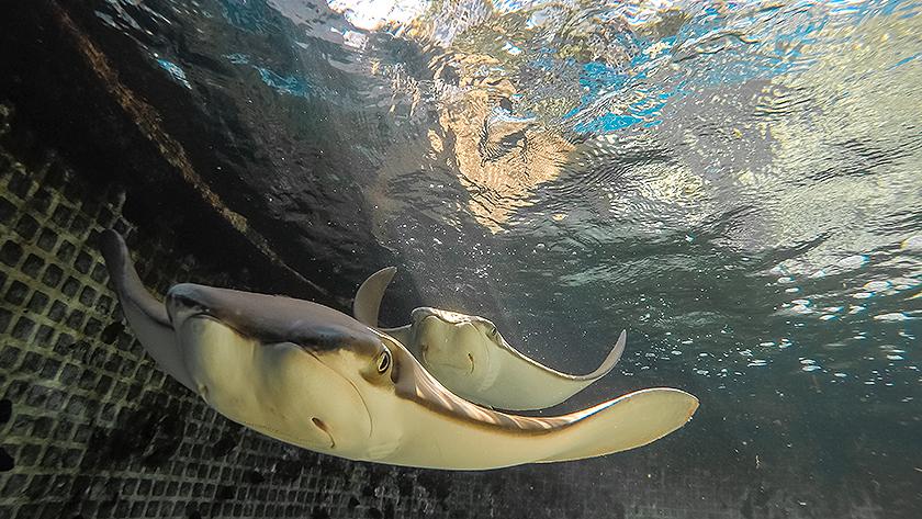 key west aquarium stingrays